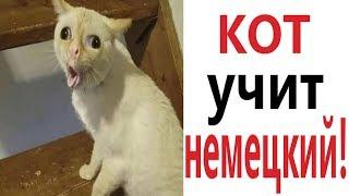 Лютые приколы. КАК КОТ УЧИТ НЕМЕЦКИЙ!!! Самое смешное видео! Засмеялся проиграл! – Domi Show!