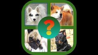'Угадай породу собак' -  ответы с  1 по 10 уровни.