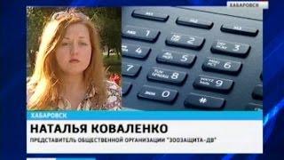 Вести-Хабаровск. Зоозащитники отказались от собак