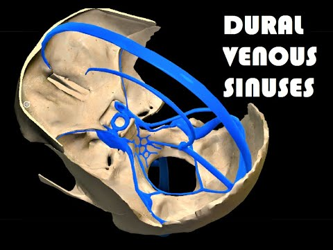 3d-anatomy-of-dural-venous-sinuses