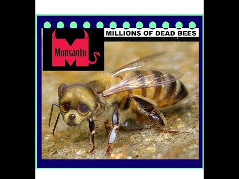 Millions of Bees Killed by Aerial Spraying Monsanto Neurotoxin + GMO Mosquitoes Released