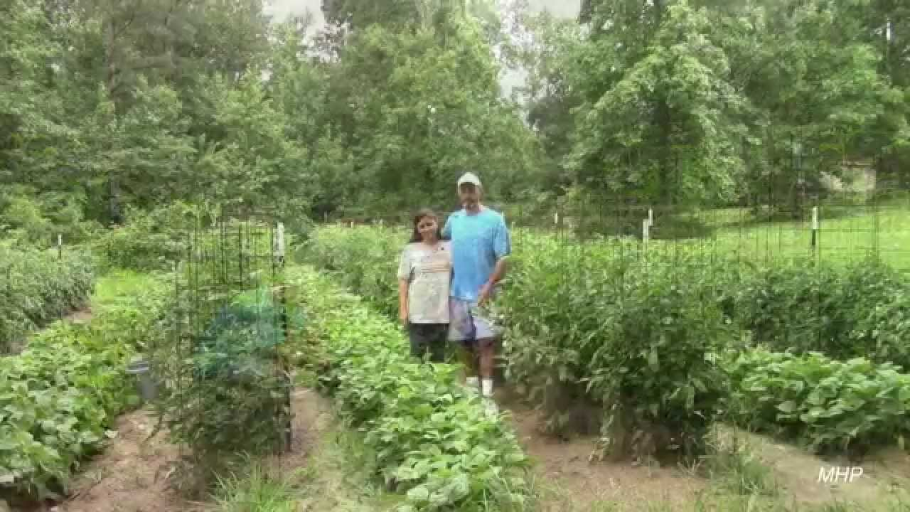 Growing Green Beans How To Get Good Production Youtube