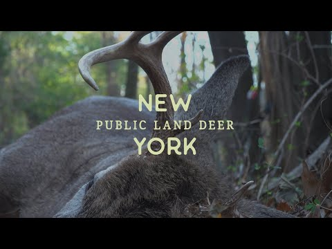 Spot And Stalk - New York Public Land Buck