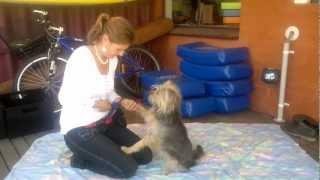 Teaching A Dog To Enjoy Nail Clipping