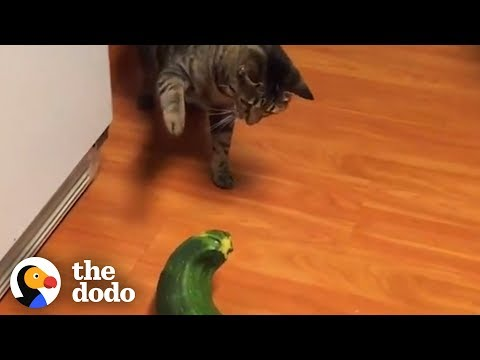 Cats Are The Weirdest  | The Dodo