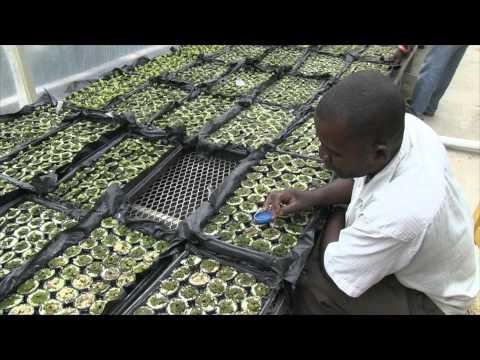 Haïti: Francois Benoit: du tireur d'élite aux salades hydroponiques