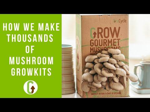 Making Mushroom Grow Kits [A Look Behind The Scenes]