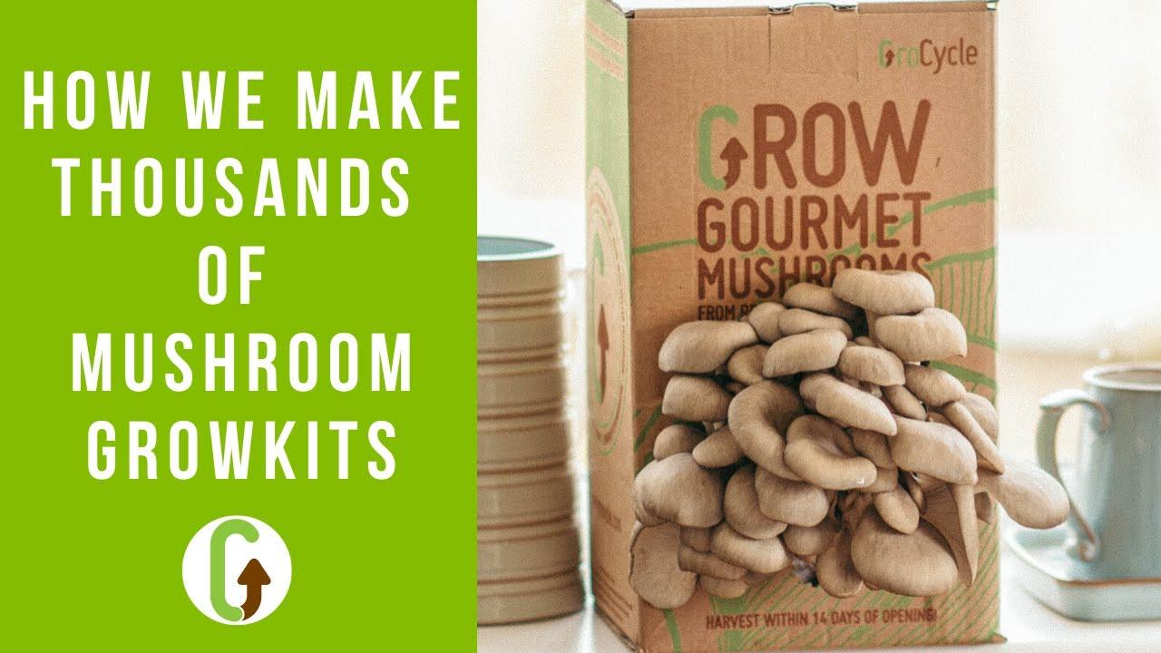 Mushroom Grow Kits [A Look Behind
