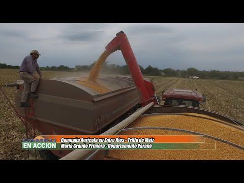 Mario Podversich - Productor Agropecuario - Muy buenos rindes de maiz en Maria Grande Primera