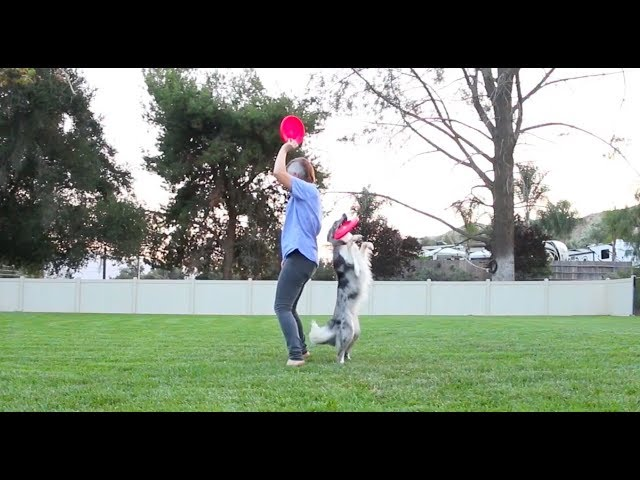 A couple of sweet dog tricks :) performed by Wish