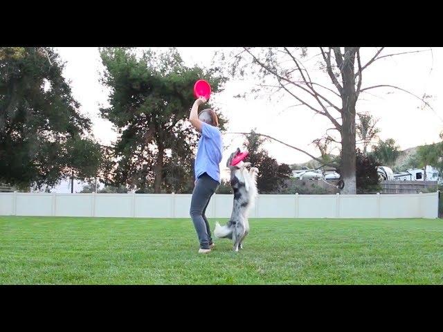 Wish has crazy skills -  Dog tricks training
