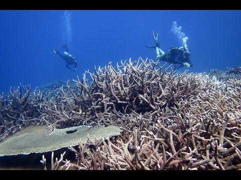 19/Jan/2015,Diving Aquarium,Marshall Islands/マーシャル諸島