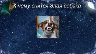 К чему снится Злая собака (Сонник)