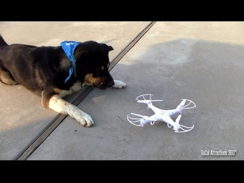 Dog loves Drone
