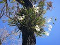 Орхидеи Мексики Прогулка по джунглям и парку