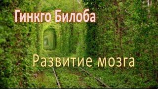 Гинкго Билоба, Развитие мозга!(Растительная добавка, которая улучшает работу головного мозга, произведенная из дерева, способного прожит..., 2015-03-27T08:30:48.000Z)