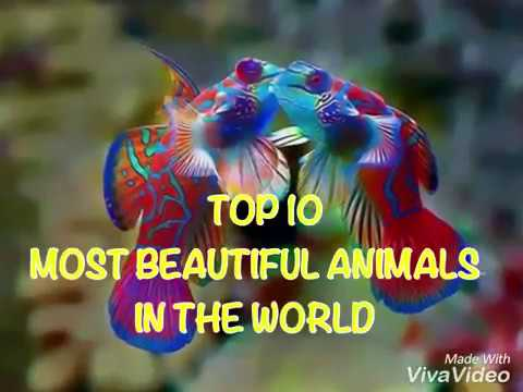 Top 10 Most Beautiful Animals In The World Youtube