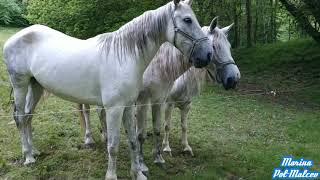 Лошади и вкусняшки