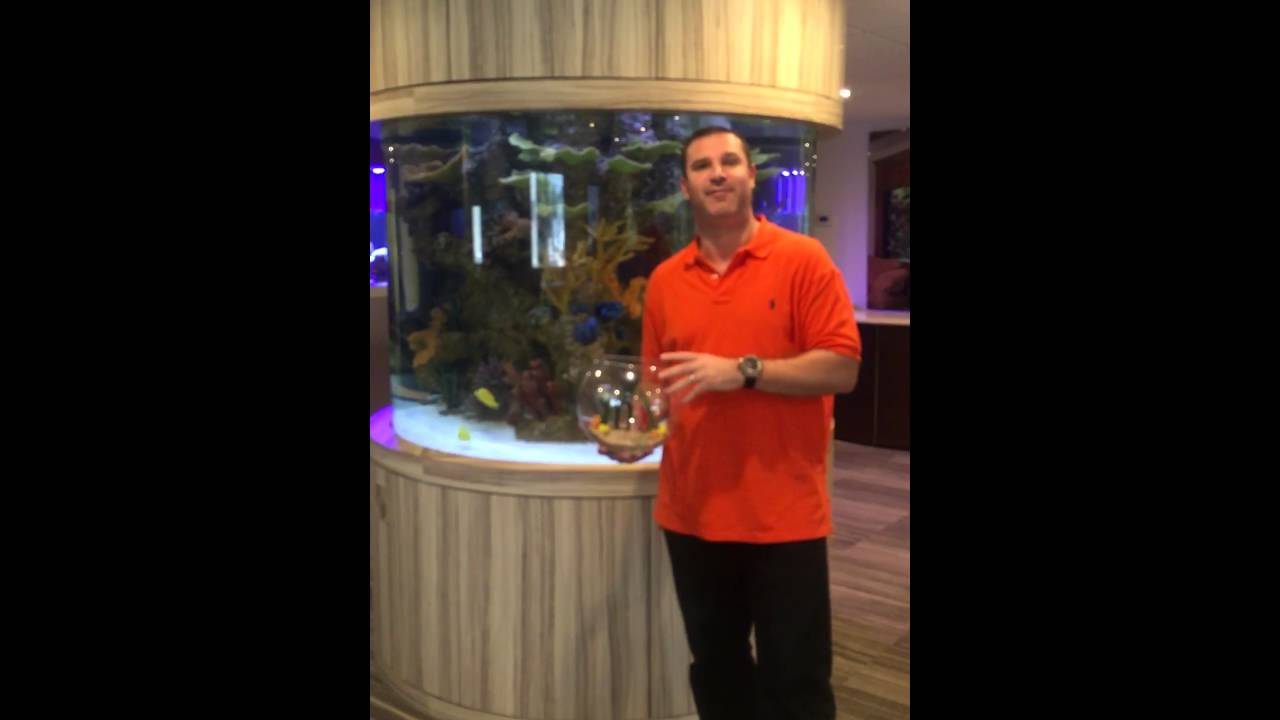 Fish tank kings a snorkelers dream - Reality Tv S Fish Tank Kings Pitches Grant Cardone Water