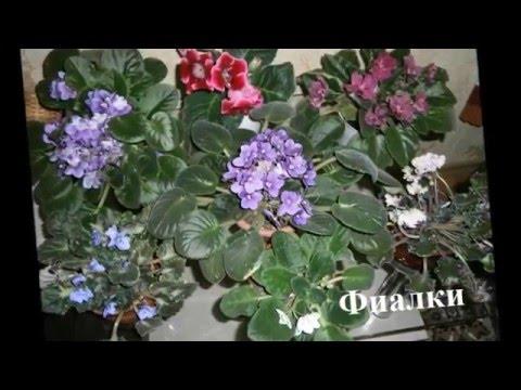 Цветущие комнатные растения  Фото+названия