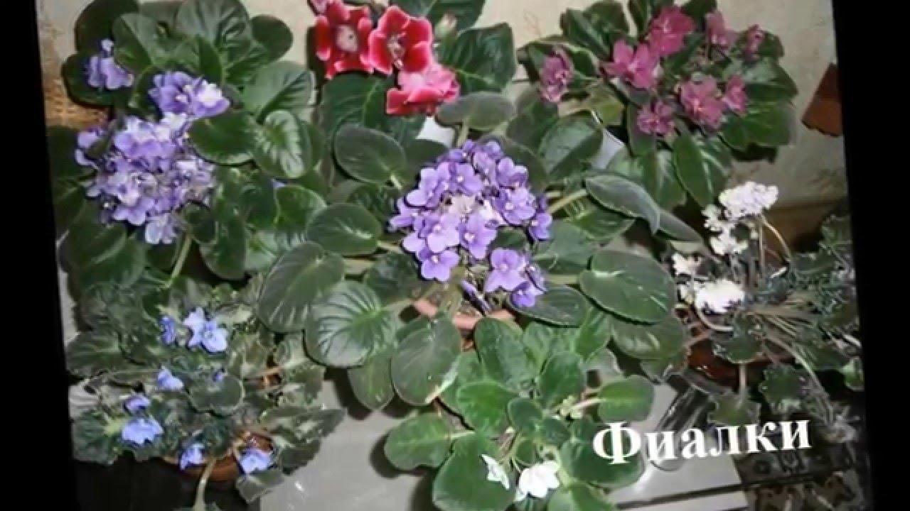 Цветущие комнатные растения Фото+названия - YouTube
