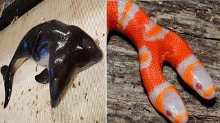 दो सिर वाले 10 अद्भुत जानवर | 10 Animals with two heads