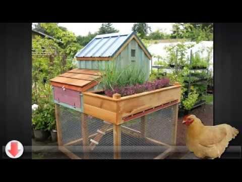winter chicken coop 2