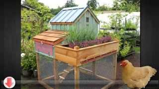 Build A Winter Chicken Coop To Protect Your Chickens In Cold Weather