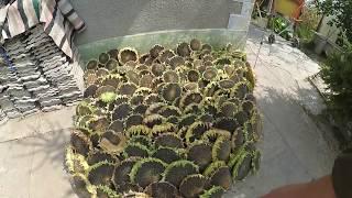 Быстрая чистка подсолнуха,  машина для выбивания семечек