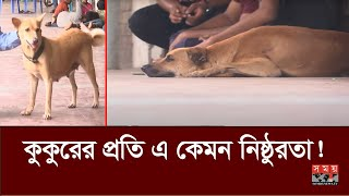কুকুরের সঙ্গে দক্ষিণ সিটির বর্বরতা! | ক্ষুব্ধ প্রাণিপ্রেমিরা! | Street Dog | Somoy TV