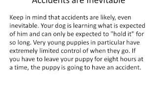 Dog Potty Training Series : How To Potty Train A Dog