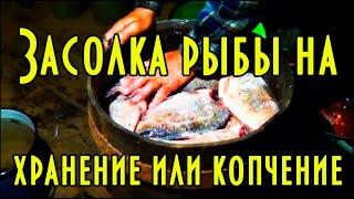 Холодное копчение рыбы. Часть 2.1 Засолка щуки и карася 🐠