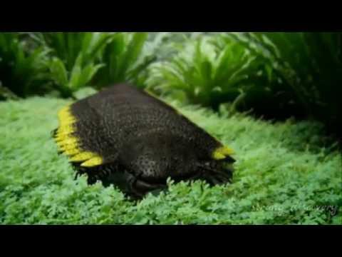 Giant Arthropods || Strangest Arthropods || Biggest Arthropods in the world
