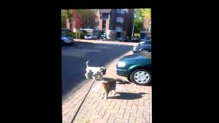 Funny Dog And Cat , Angry Cat Vs Zami Schnauzer.