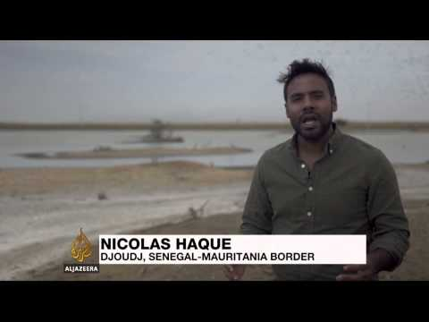 Fears in Senegal over declining wetland wildlife