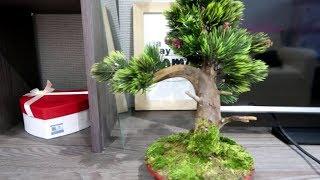 Найдите в лесу корягу и сотворите это чудо. Мастер-класс бонсая с нуля практически бесплатно.