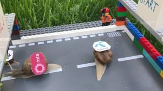 Speedtest: ko ce biti najbrži puž