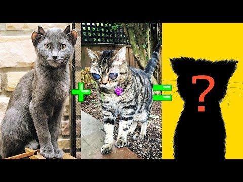 Самые удивительные гибриды кошек за 11 июня