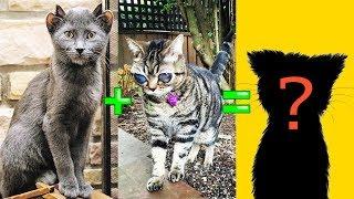 САМЫЕ УДИВИТЕЛЬНЫЕ ГИБРИДЫ КОШЕК – Скрещивание кошек разных пород - Смешные кошки МатроскинТВ
