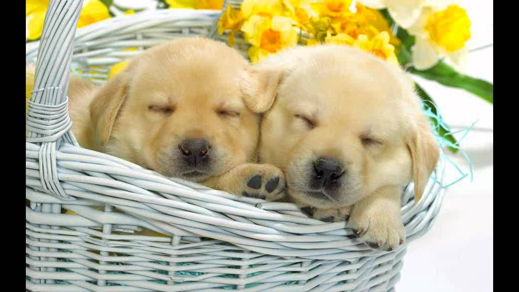 When You Say Nothing At All Cute Dogs Wallpapers