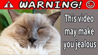Warning. This Video May Make You Jealous | Bowie The Ragdoll Cat