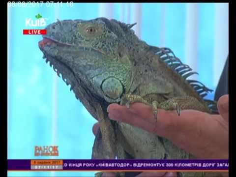 Телеканал Київ: 08.08.17 Ранок по-київськи