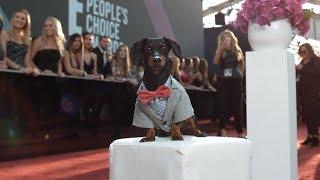 Crusoe Won a People's Choice Award!!!