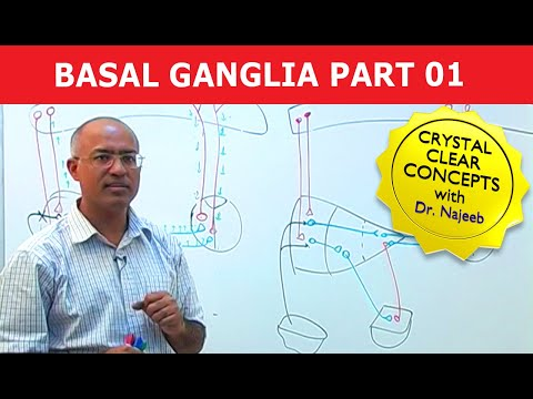 Basal Ganglia - Neuroanatomy - Part 1/3