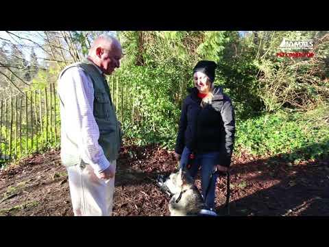 Pet Corrector   Retraining aggressive dogs -  Piper's Story