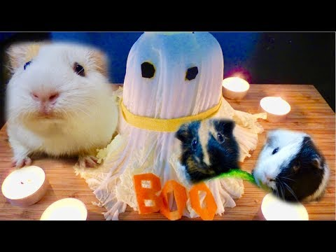 A Halloween Ghost for the Guinea Pigs