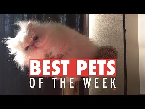Best Pets of the Week | January 2018 Week 1