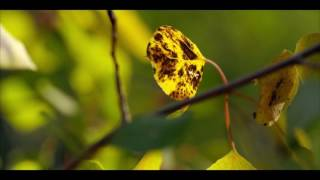 Солнечный день Самое красивое видео 4k Ultra HD