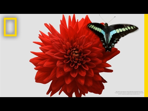 Watch a Delicate Dance Between Flowers and Insects | Short Film Showcase