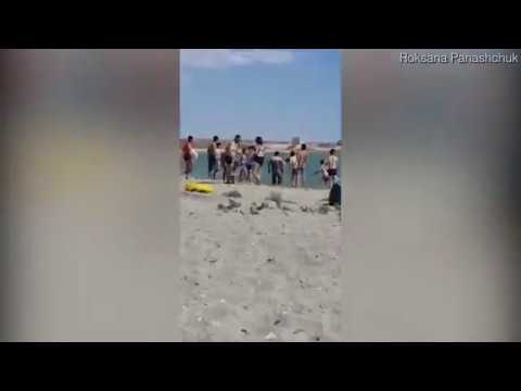ourists beat seal unconscious on Kazakhstan beach